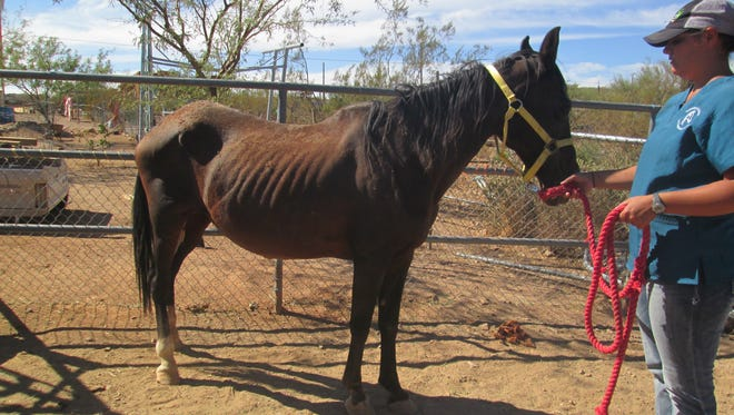 The Maricopa County Sheriff's Office said it seized 16 neglected animals after responding to several neighborhood complaints in New River.