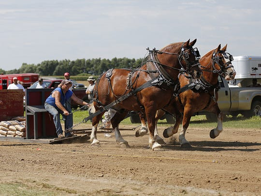 Good old-fashioned horse power is on display during the horse pulling contest at the annual Alto Fair.