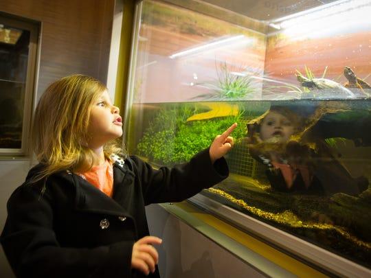 Skylar Hamm, 4, spots a turtle on a family visit to