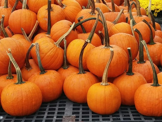 Pumpkins piled up.