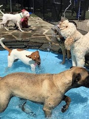 Dogs can cool off at Purr'n Pooch.