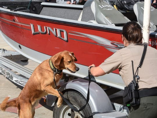 K-9 Brady works with handler Julie Siems to search