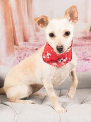 Kandee is available for adoption at 952 W. Melody Ave.