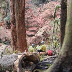 With Silver Creek Fire nearly out, officials have new questions to consider