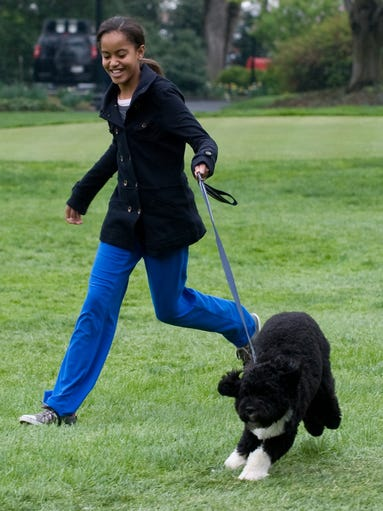 Malia Obama walks the family's Portuguese water dog,