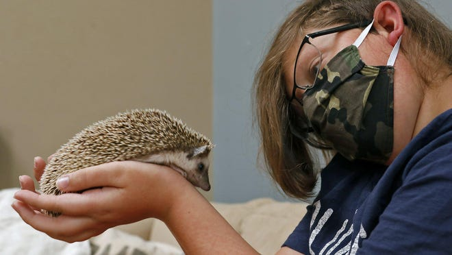 Jackson Anderson, 13, of Lewis Center handles his pet hedgehog, Betsy.