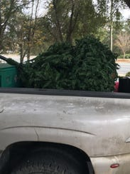 Jimbo Fisher's Christmas tree was picked up by a fan.