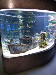 "The crew from ""Tanked"" stocked this 3,200-gallon aquarium with 20 difference species of fish."