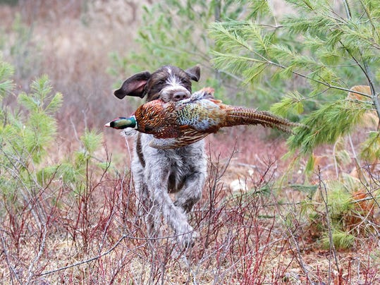 BFP watson with pheasant use-1.jpg