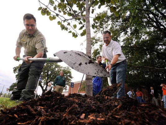 No Throwing Shade On Arbor Day It S Time To Plant