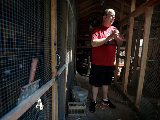 Stan Elkins gives a tour of the pigeon breeding coop at his Bartlett home Tuesday morning. Elkins is a pigeon racer, and after three years in the sport hopes to start a pigeon racing club in the Memphis area.