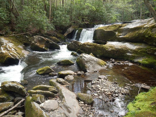 Fly fishing in great smoky mountains national park for Smoky mountain trout fishing