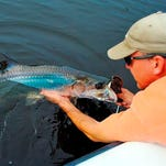 Wildfly Charters Capt. Gregg McKee used a live pinfish to catch and release this beautiful juvenile tarpon in a Matlacha canal.