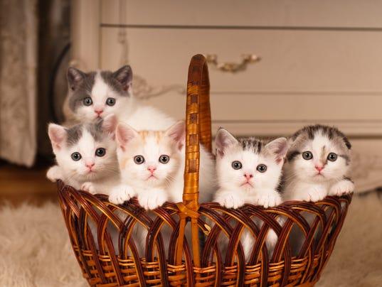 Five kittens in a basket