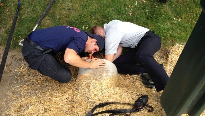 Inspector Dan Rickard (left) and Lt. Jason Baloga rescue the kitten from the culvert.