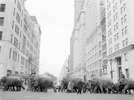 "A policeman calmly directs a parade of elephants from the Ringling Bros. and Barnum & Bailey Circus across the busy intersection of Fifth Avenue and 57th Street on March 27, 1955, in New York. The Ringling Bros. and Barnum & Bailey Circus will end ""The Greatest Show on Earth"" in May 2017, following a 146-year run of performances."