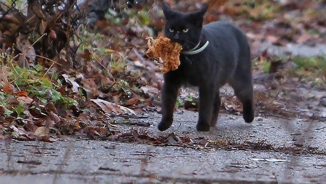 We don't recommend feeding your cat fried chicken. But this picture is awesome.