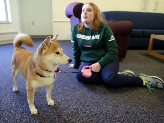 PJ, a Shiba Inu, serves as an emotional support animal