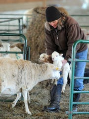 Cathy Robertson carries twin newborn lambs in such a manner as to make sure the mother understands all is well with them and follows. She leads them towards a smaller pin where they can remain separated from the other sheep until ready to rejoin the larger herd at Big Valley Ranch near Monterey on Wednesday, Feb. 6, 2013.