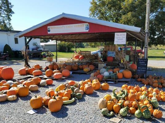 636443783198698858-6-1025-evfe-ev-pumpkins.jpg