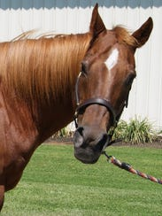 Lucy, a therapeutic riding horse at Centenary University, was named the Region 2 Horse of the Year by the Professional Association of Therapeutic Horsemanship International.