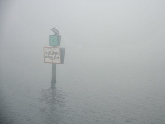 Foggy morning: A pelican sits on a channel marker in