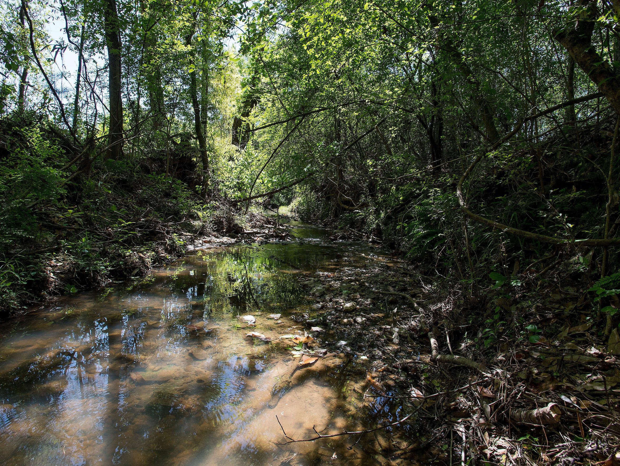 The woods in Elmore County, Ala. near where Robin White
