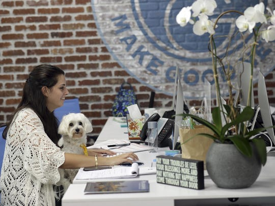 Kristine Florio works as her dog Gio sits in her lap at O'Connell & Goldberg Public Relations, in Hollywood, Fla. Barbara Goldberg, the CEO of the company, is a small business owner who believes pets improve the quality of their work life, boosting morale and easing tension for staffers.