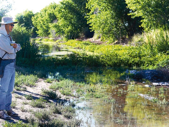 Albert Wong looked out over the water released into the Rio Bosque Wetlands Park in 2015. The extra water helps make the wetlands more lush.