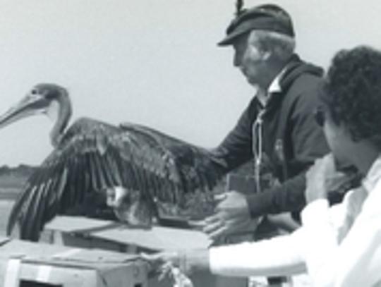 Volunteers, considered the backbone of CROW, release