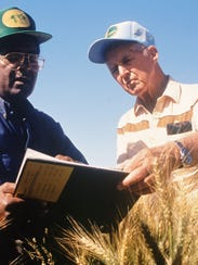 Sanjaya Rajaram and Norman Borlaug work on wheat varieties