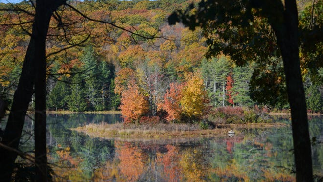 HUBBARDSTON - An island in Williamsville Pond along Barre Road shows off fall colors Sunday.