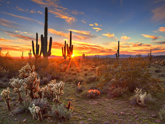 The sun setting between some of Arizona's iconic saguaros