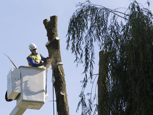 APC TreeCutting_061915_djp0017