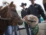 Cam the Ram and Cowboy Joe