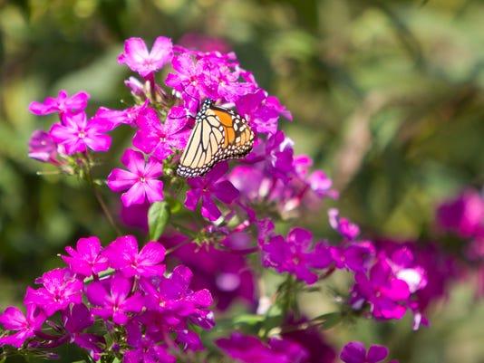 636088574841594950-Butterfly-garden-01.jpg