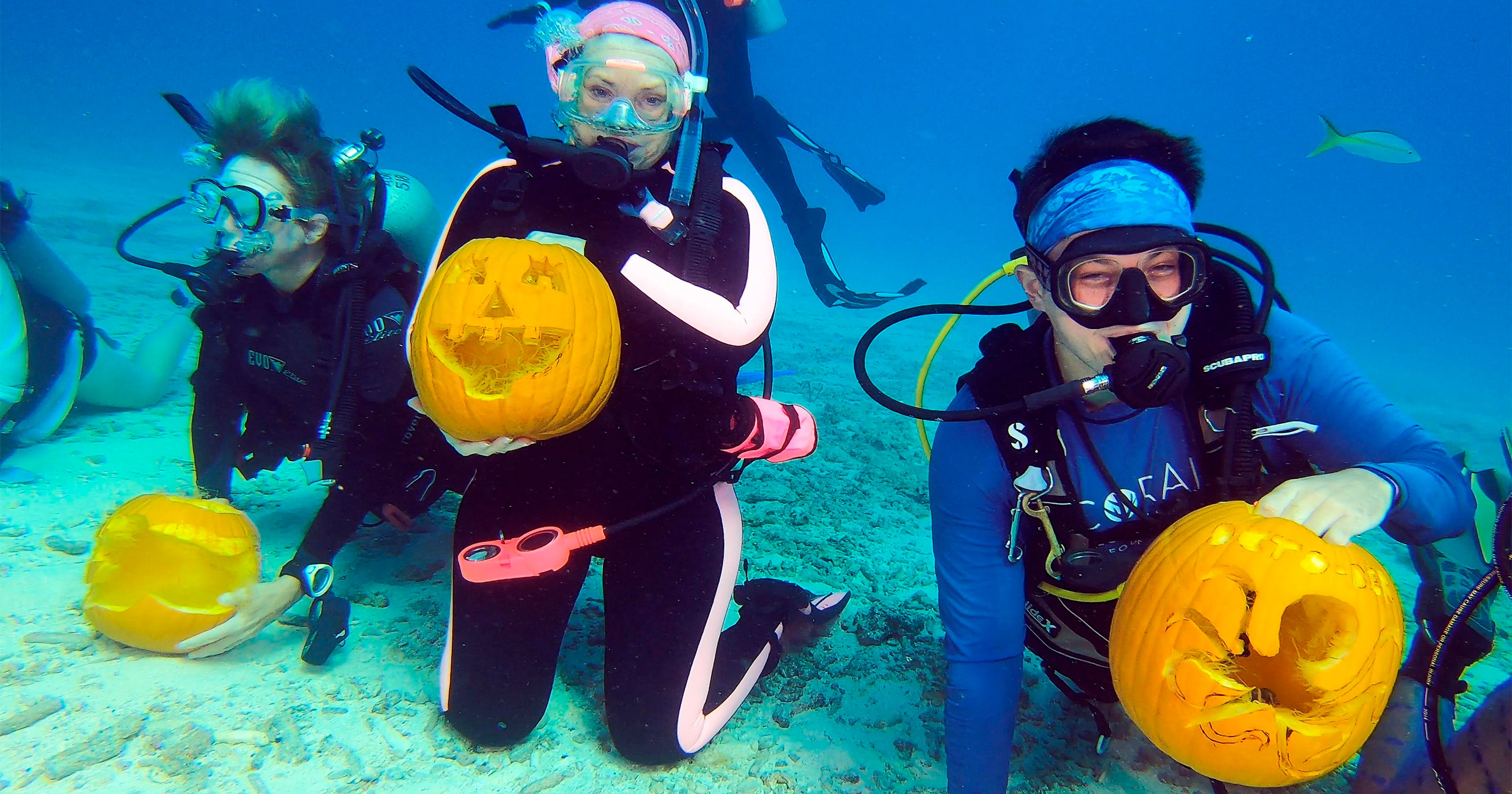 Scuba pumpkins, whey vodka, acorn bumper crop: News from around our 50 states