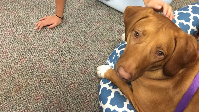 Ginger makes a special appearance at The News-Press for national Take Your Dog to Work Day.