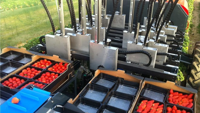 A robotic strawberry picker built by AgroBot, a Spanish company. It's being tested in California as hiring laborers becomes increasingly difficult.