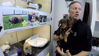 Bark Avenue Puppies owner Gary Hager is shown with his puppy Reese at the Red Bank shop on West Front Street Friday, May 11, 2018.  A change in town ordinances banning the sale of non-rescue puppies could shutter his shop.