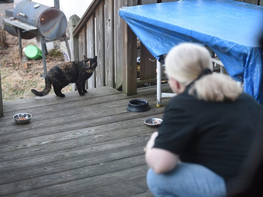 Oreo, one of seven stray cats that visit the backyard of Susan Kraft, who participates in the Bergen County trap-neuter-return program, looks for food as Kraft tries to coax it at her home in Lyndhurst on March 5, 2018. Lyndhurst has been doing this program for two years and has had success in reducing its feral-cat population.