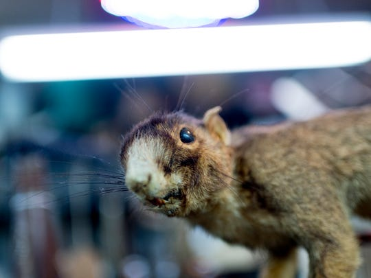A stuffed squirrel could be yours at Pickers Paradise