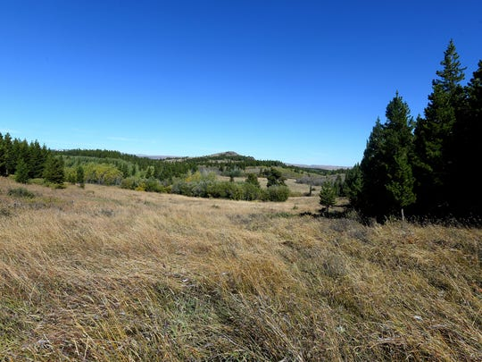 A hay meadow on the Lutz family's homestead in Helena-Lewis and Clark National Forest. The 160 acres originally supported beef and dairy cows. In later years, it was leased for grazing. No cattle grazing is occurring at the homestead at this time.