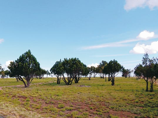 An example of pruning and thinning on a property.