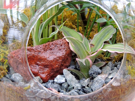 Miniature and terrarium gardens are a great way to