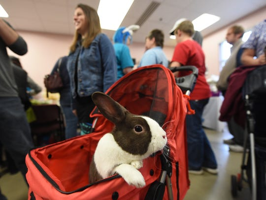 """Buster pops up out of his stroller during a visit to """"Bunfest"""" at the York County SPCA on Saturday, March 19, 2016. Buster's owners, Kyle and Emily Showalter of Dover, purchased the small animal stroller on Amazon.com to give him more room when they visit events and allow people to see him."""