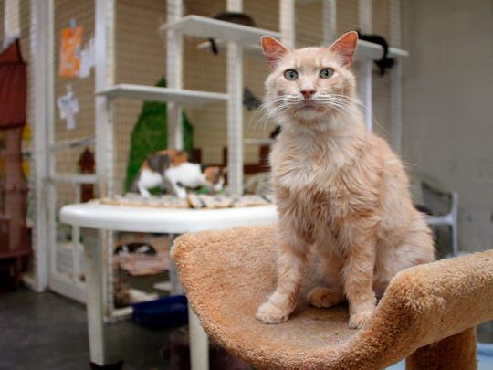 The Coshocton County Animal Shelter is full of residents looking for a permanent home.