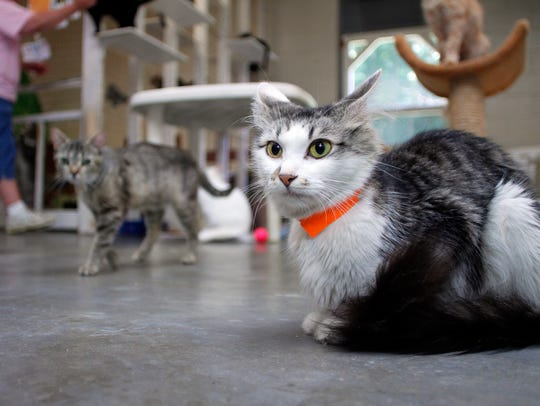 The Coshocton County Animal Shelter is full of residents