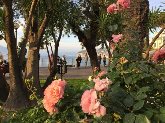 Roses in a park in Sorrento, Italy.