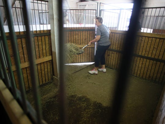 Kelly Ward, of Warsaw and the Kamelid Kushers 4-H, cleans out llama stalls Thursday at the Coshocton County Fair after loading the animals onto trailers.
